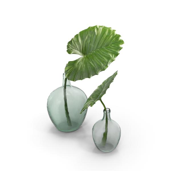 Taro Leaf PNG & PSD Images