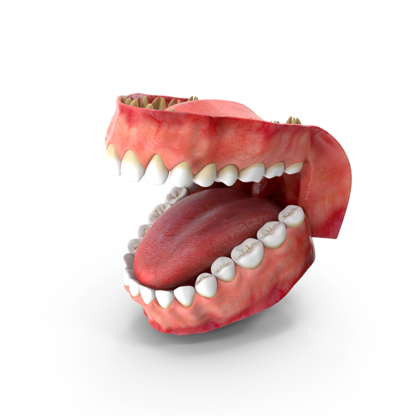 Teeth and Gums PNG & PSD Images