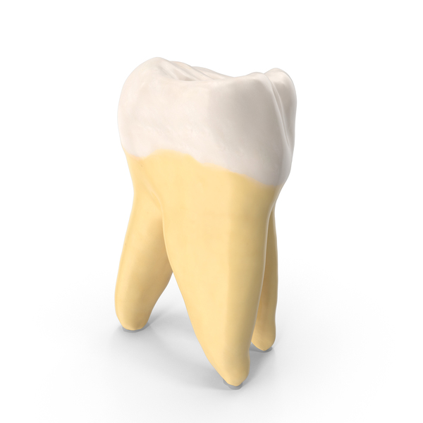 Third Molar Upper Jaw Right Clean PNG & PSD Images