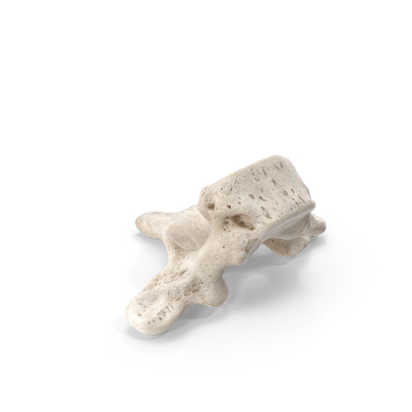 Thoracic Vertebrae Th1 to Th12 White PNG & PSD Images