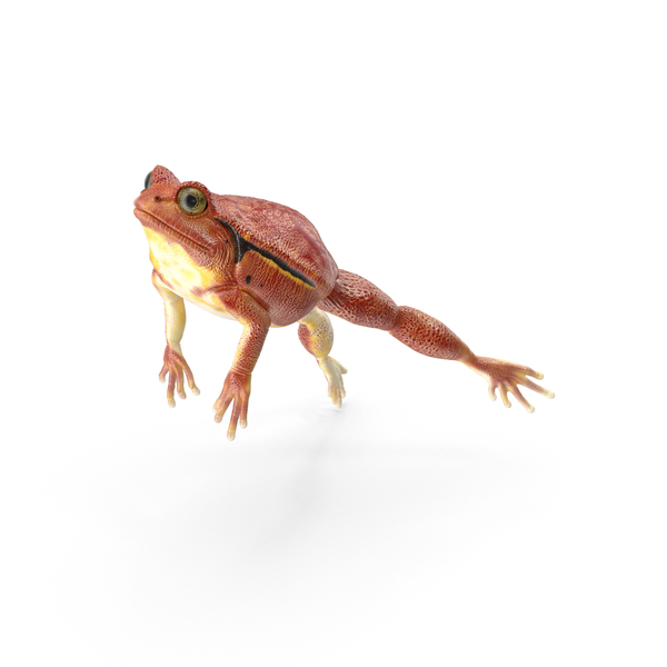 Tomato Frog PNG & PSD Images