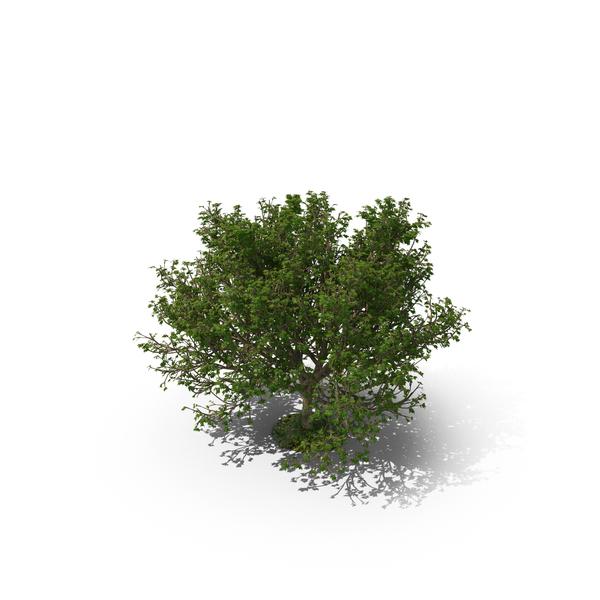 Tree Object