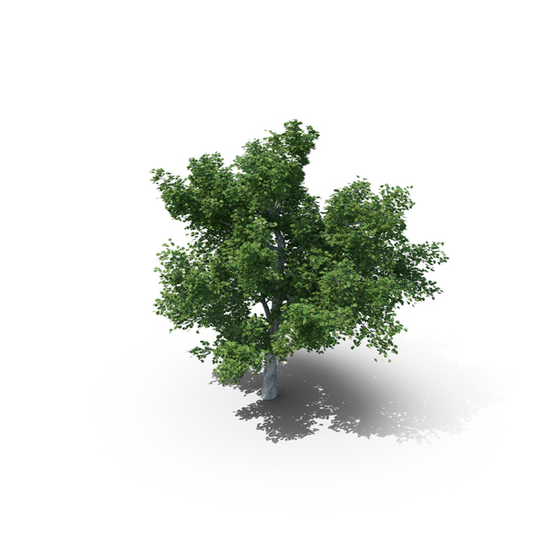 Tree PNG & PSD Images
