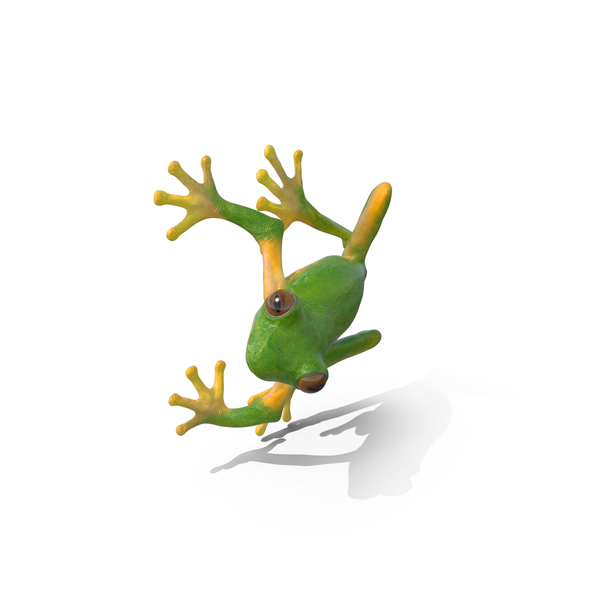 Tree Frog On Tree Pose PNG & PSD Images
