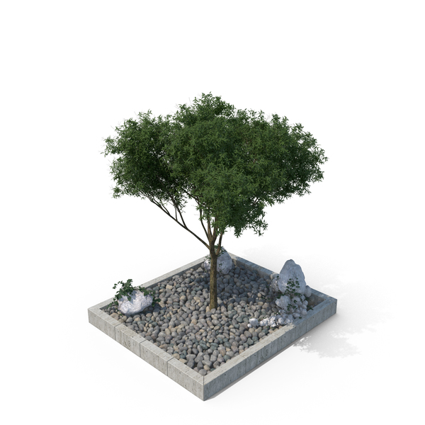 Barrier: Tree in Gravel Filled Pit PNG & PSD Images