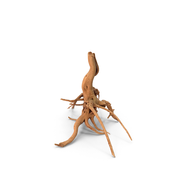 Tree Roots PNG & PSD Images