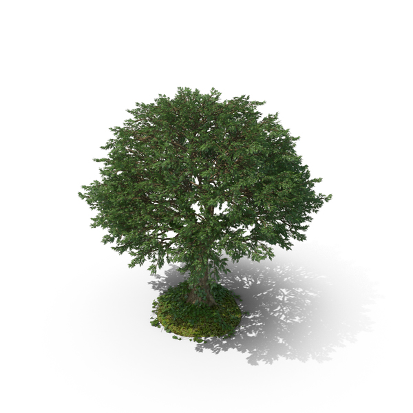 Tree with Vines PNG & PSD Images