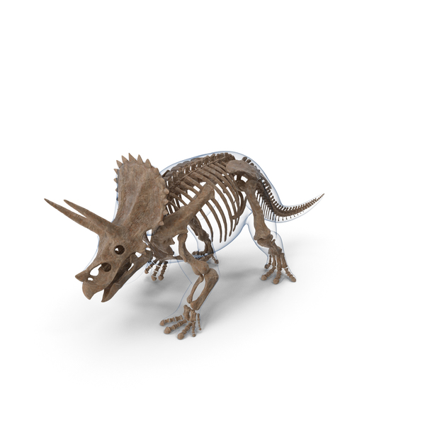Triceratops Fossil Walking Pose with Transparent Skin PNG & PSD Images
