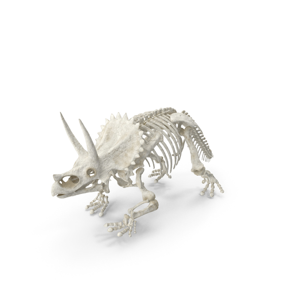 Triceratops Horridus Skeleton PNG & PSD Images