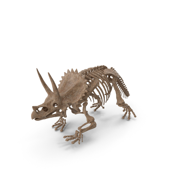 Triceratops Horridus Skeleton Fossil PNG & PSD Images