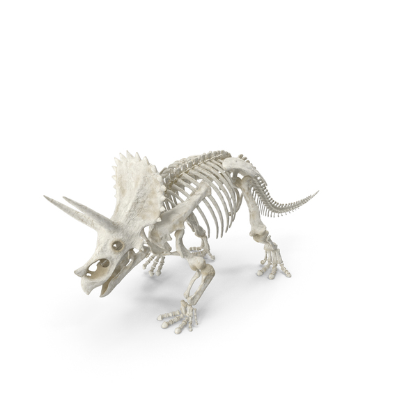 Triceratops Horridus Skeleton Walking Pose PNG & PSD Images