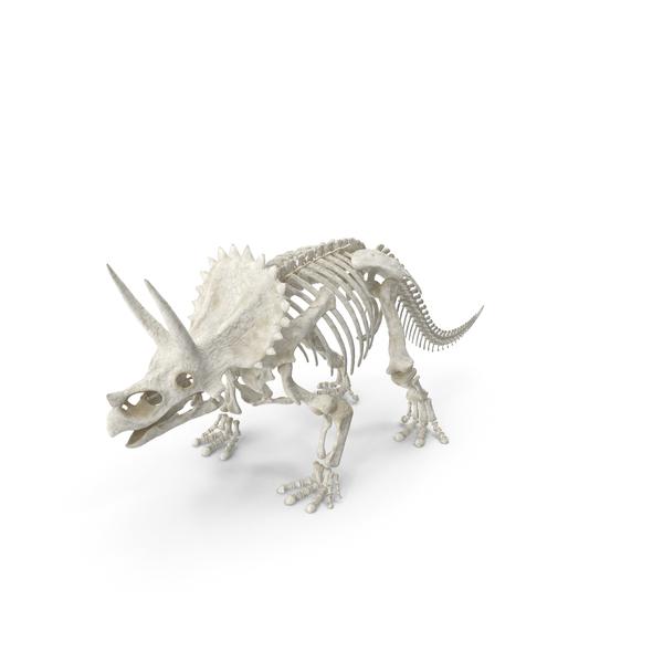 Triceratops Skeleton PNG & PSD Images