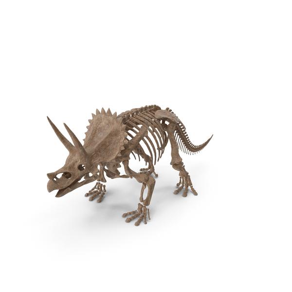 Triceratops Skeleton Fossil PNG & PSD Images