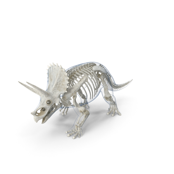 Triceratops Skeleton Walking Pose with Transparent Skin PNG & PSD Images
