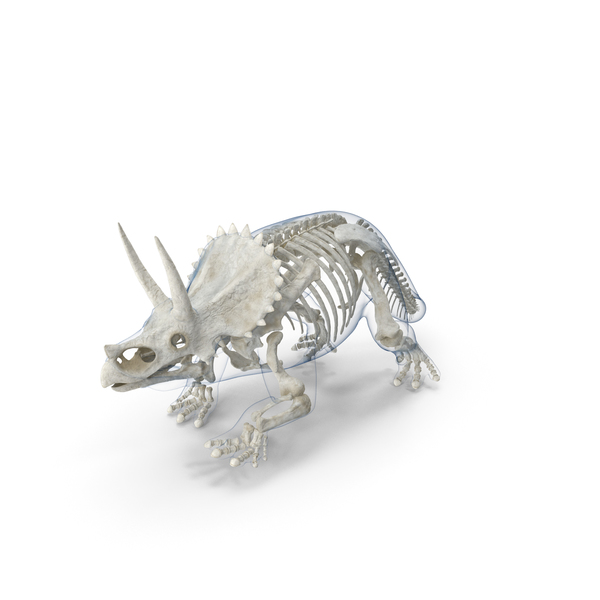 Triceratops Skeleton with Transparent Skin PNG & PSD Images