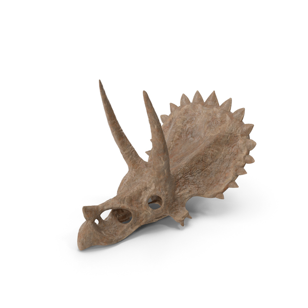 Triceratops Skull Part Fossil PNG & PSD Images