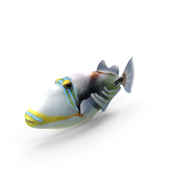 Triggerfish PNG & PSD Images