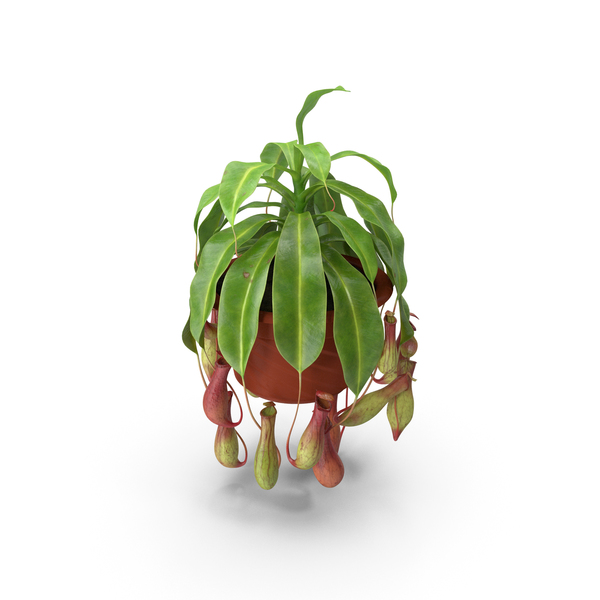 Tropical Pitcher Plant in Pot PNG & PSD Images