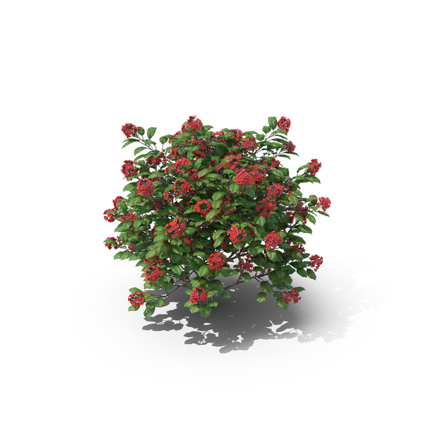 Tropical Rose Hydrangea PNG & PSD Images