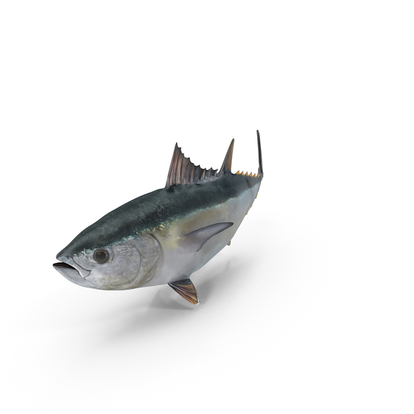 Tuna Fish Object