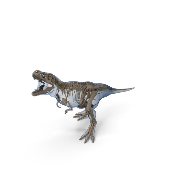 Tyrannosaurus Rex Skeleton Fossil with Skin Standing Pose PNG & PSD Images