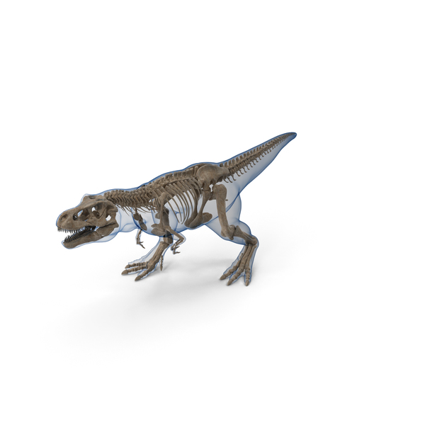 Tyrannosaurus Rex Skeleton Fossil with Skin Walking Pose PNG & PSD Images