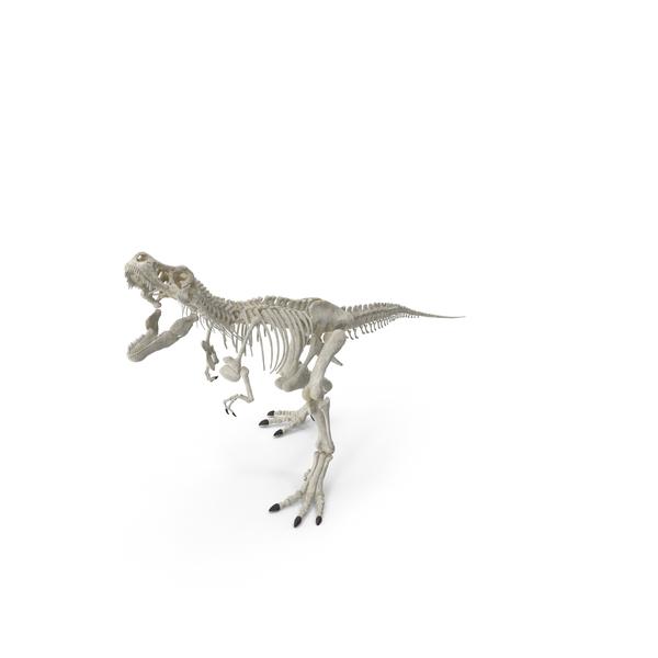 Tyrannosaurus Rex Skeleton Standing Pose PNG & PSD Images