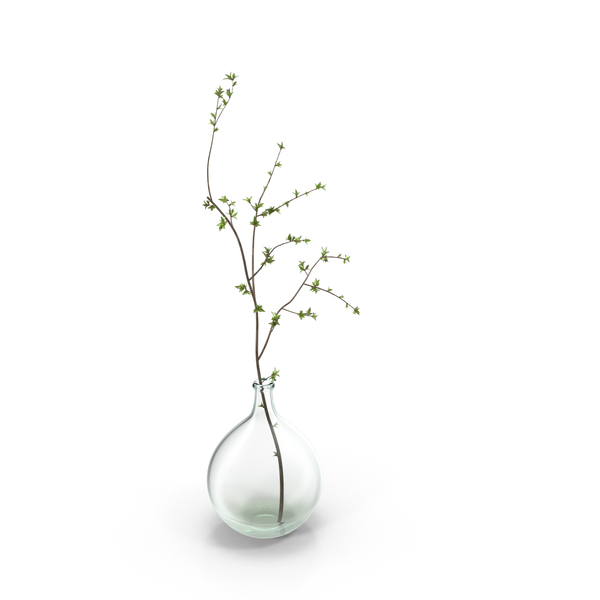 Vase with Single Branch PNG & PSD Images