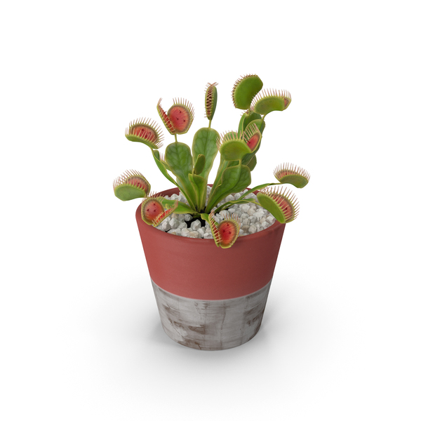 Venus Flytrap in Plant Pot PNG & PSD Images