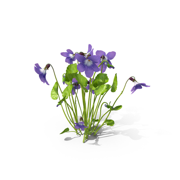 Violet Object