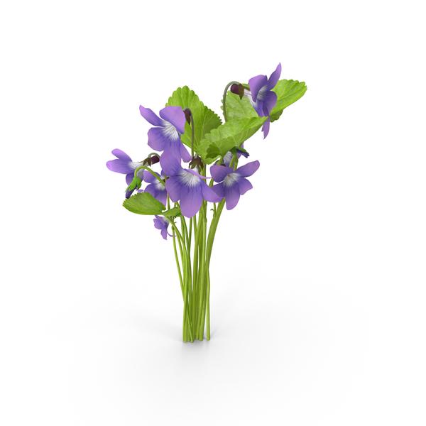 Violets PNG & PSD Images