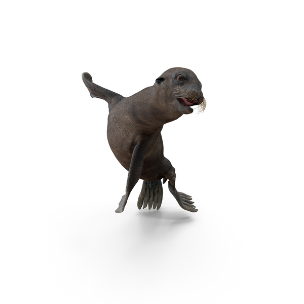 Wet Sea Lion Swimming Pose PNG & PSD Images