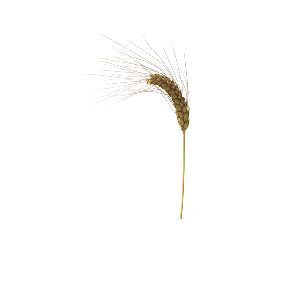Wheat Branch PNG & PSD Images