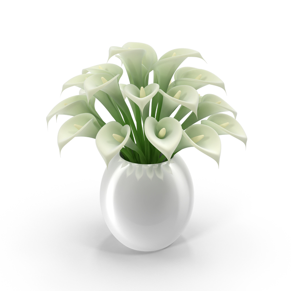 White Calla Lilies in Vase PNG & PSD Images
