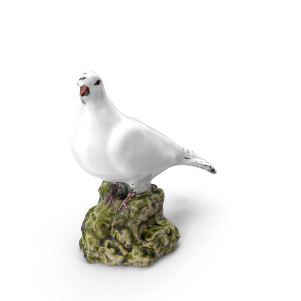 White Dove PNG & PSD Images