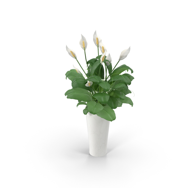 White Flowers in White Planter PNG & PSD Images