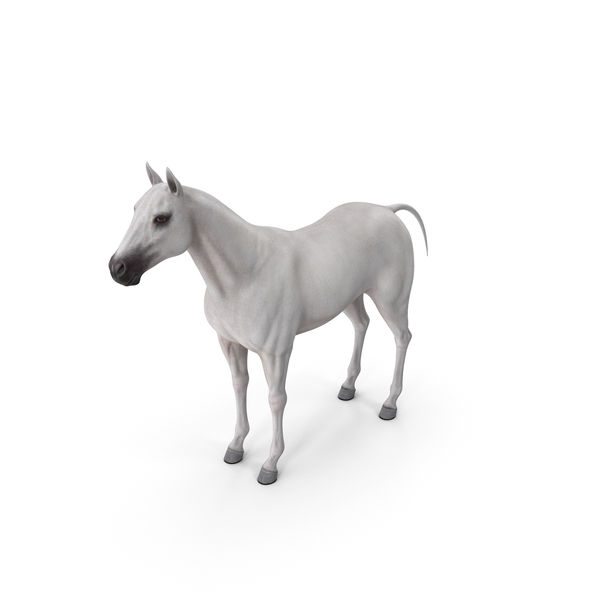 White Horse PNG & PSD Images