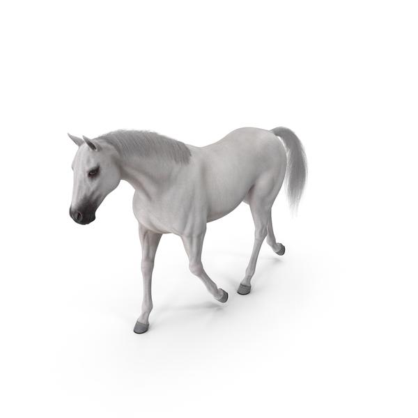 White Horse Gait Fur PNG & PSD Images