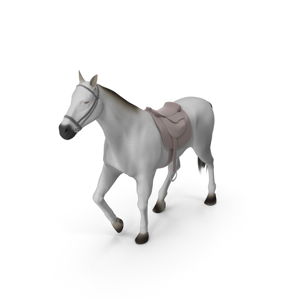 White Horse with Saddle PNG & PSD Images
