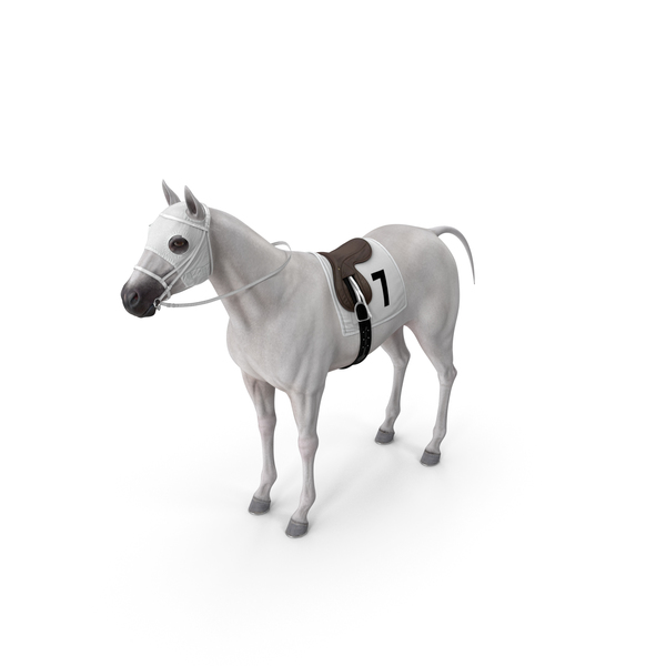 Saddled Horse: White Racehorse PNG & PSD Images