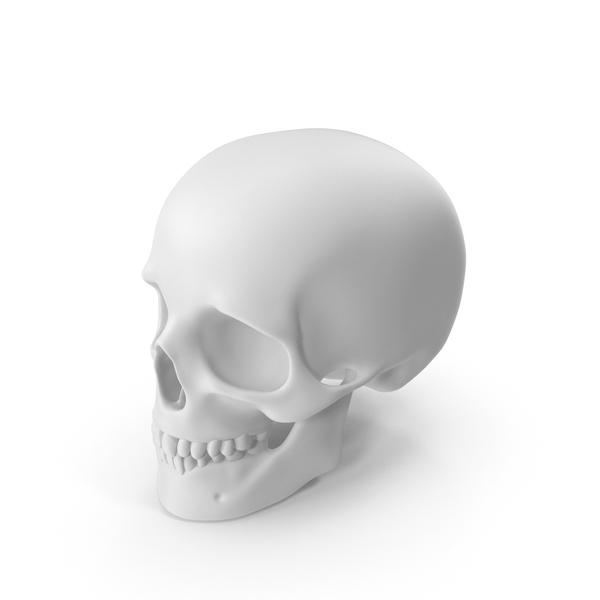 White Skull PNG & PSD Images