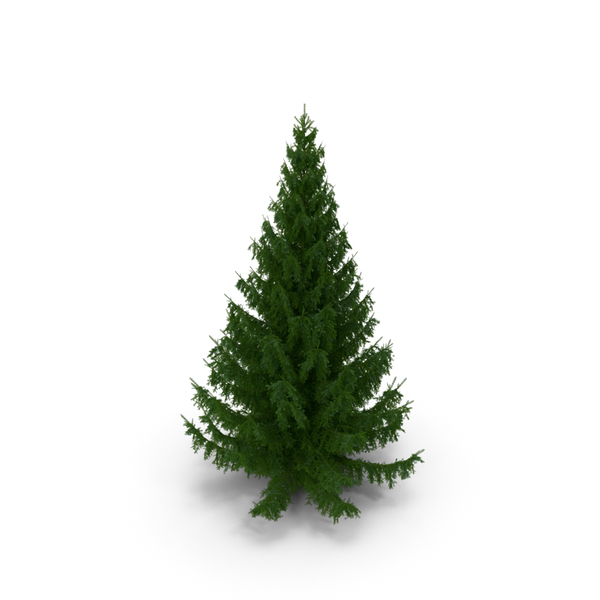 White Spruce Tree PNG & PSD Images