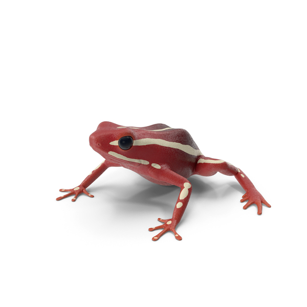White Striped Dart Frog PNG & PSD Images