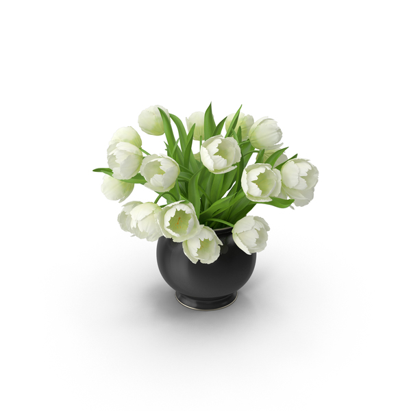 Flower Pot: White Tulips PNG & PSD Images