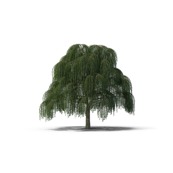 Willow Tree Object