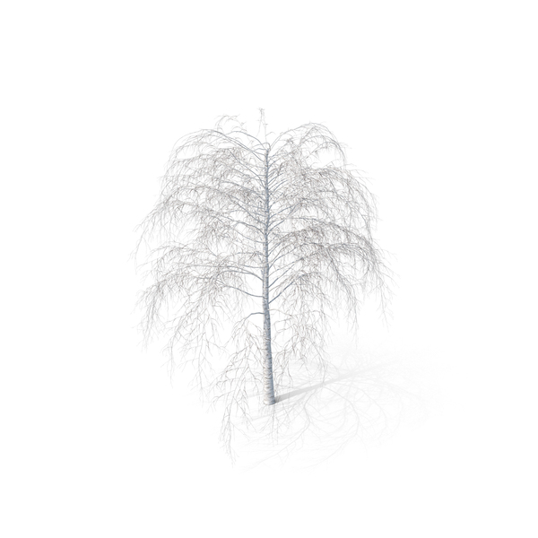 Winter Birch Tree PNG & PSD Images
