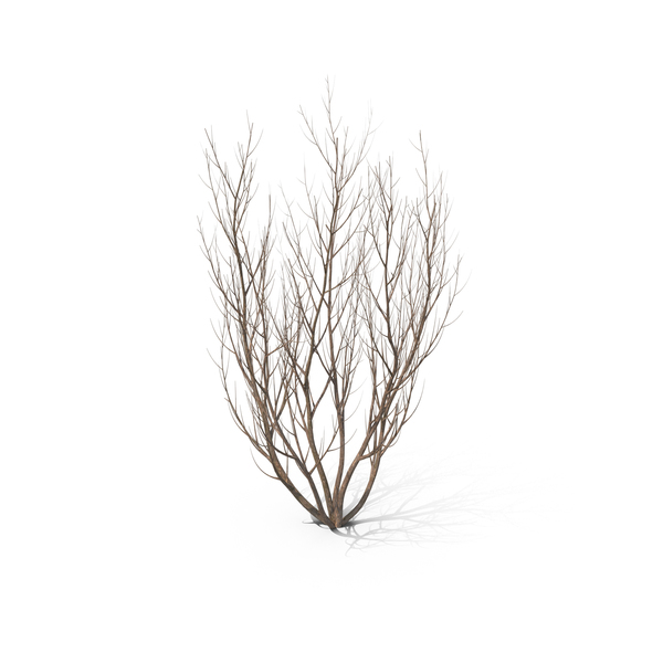 Winter Bush PNG & PSD Images