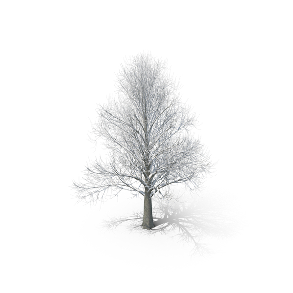 Winter Tree with snow PNG & PSD Images