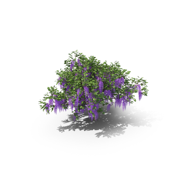 Wisteria Tree PNG & PSD Images