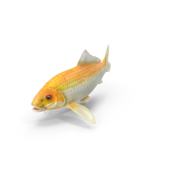 Yellow koi ogon fish png images psds for download for Ogon koi fish